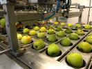 Apfelschäl- und -schneidanlage
